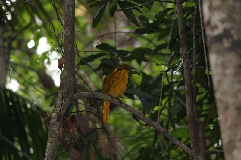 Bird in Paluma